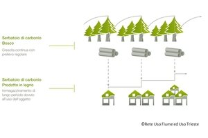 Value chain forest-wood
